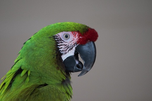 How Does Food Benefit The Birds Body